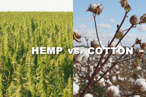 HEMP vs. COTTON